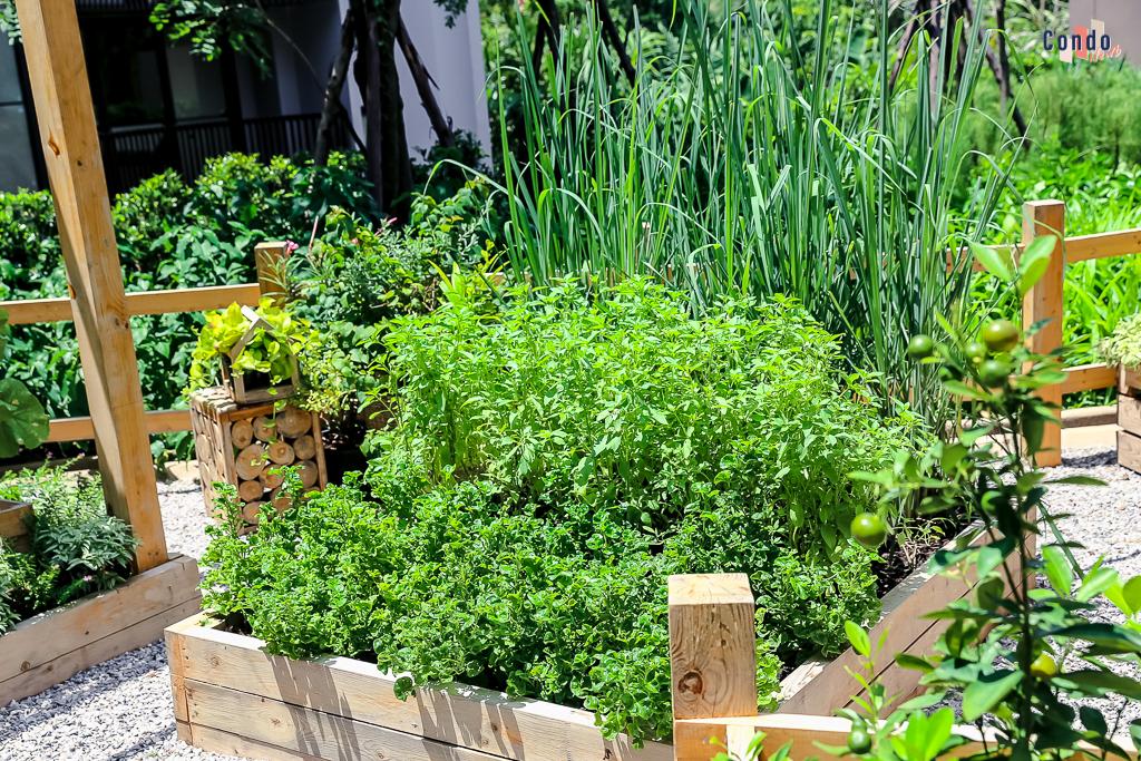 Sansiri Backyard