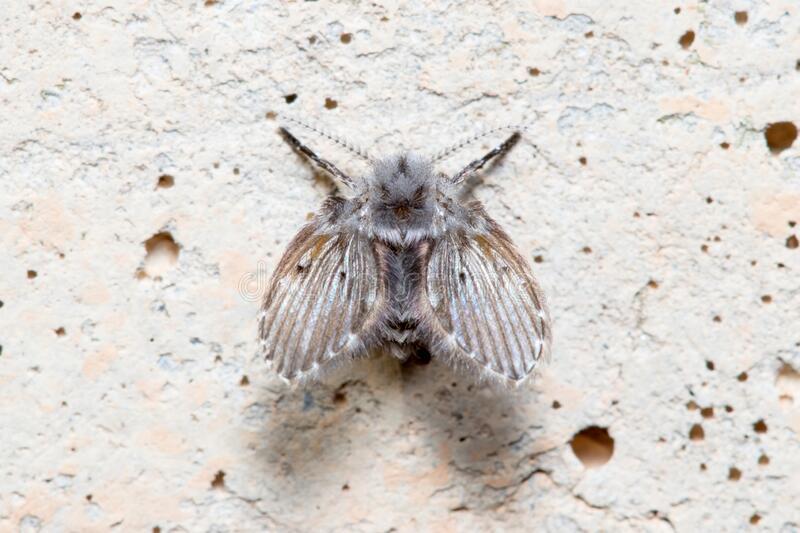 วิธีไล่แมลงหวี่ เห็นผลทันใจ ไม่เสี่ยงเป็นโรคร้าย